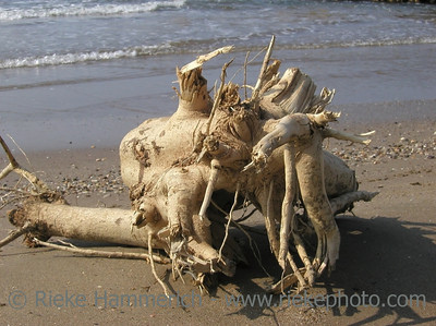Cast Away - Part of a tree on the beach of the mediterranean sea