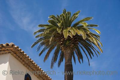 luxury hotel and a palm tree - saint-tropez, french riviera, mediterranean sea - adobe RGB