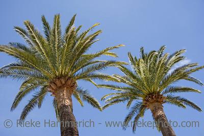 palm trees - french riviera, mediterranean sea - adobe RGB