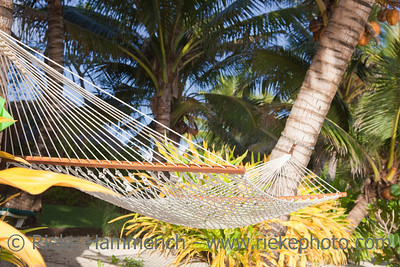 Hammock between two Coco Palms