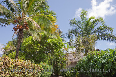 Coco Palms and palm-thatched Hut