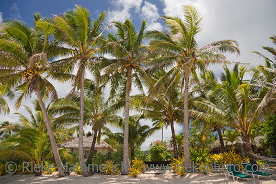 Tropical Beach with Palm Trees, Lounge Chairs and Palm-thatched Huts