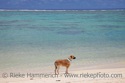 Dog on Tropical Beach