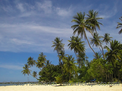 tropical beach with palm trees - tobago, west indies