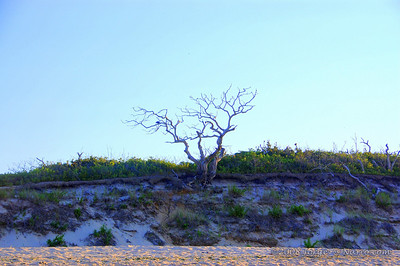 National Seashore, Cape Cod