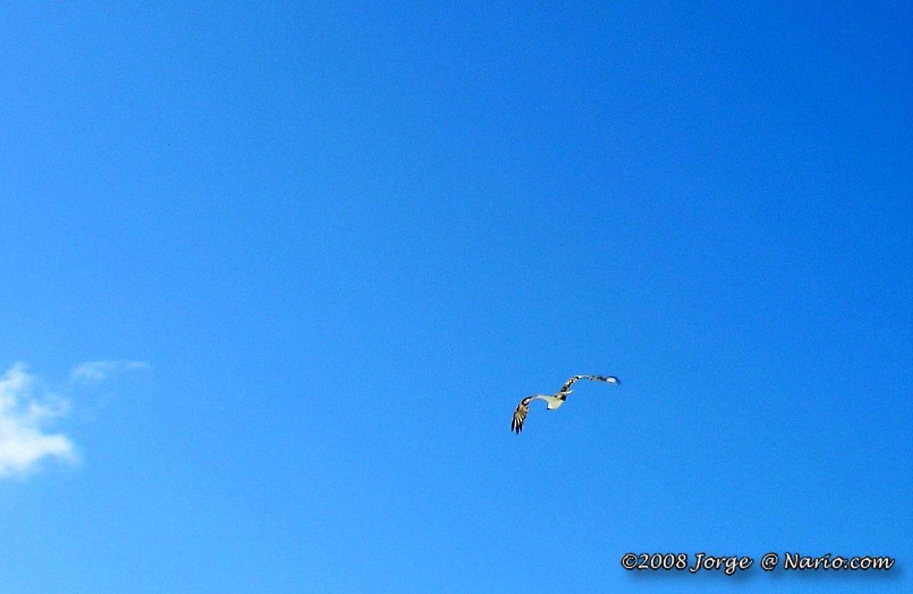 Think is a gull?<br /> It isn't - see below.