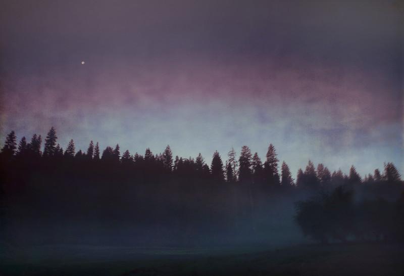 Pre-Dawn Meadow