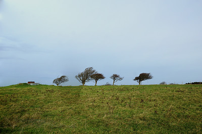 Trees on The South Downs