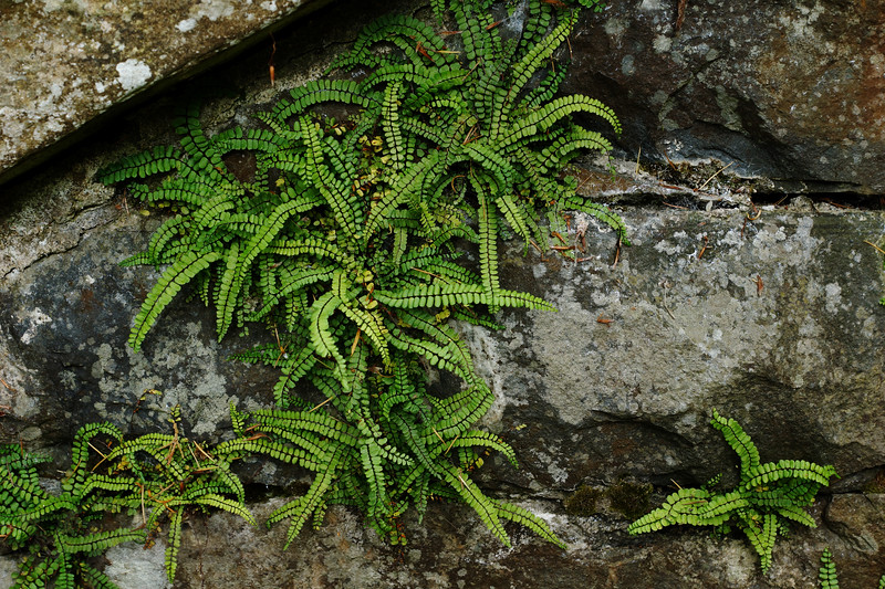 Plants in Bodnant Gardens