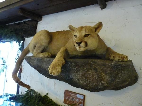 Stuffed Mountain Lion