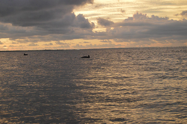 Dolphins by the Bay