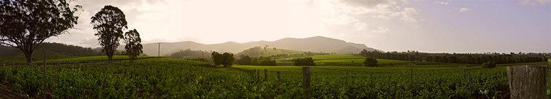 Hunter Valley Vineyards