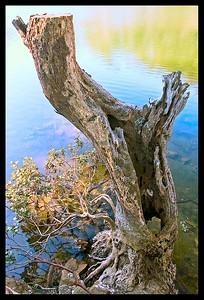 Royal National Park, NSW Australia