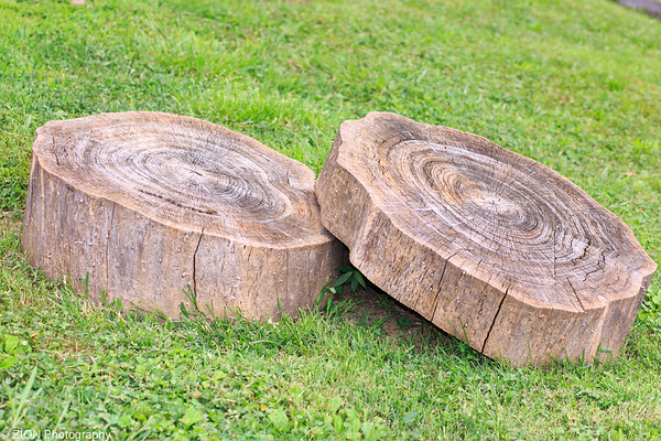 Wood rounds at a local garden, St Louis, MO.