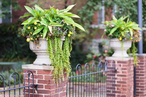 Plants on a concrete post