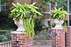 Plants on a concrete post.
