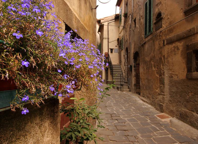 Flowers, Castel di Piano