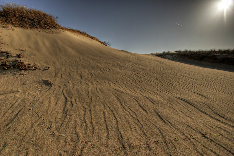Dune tracks, Cape Cod