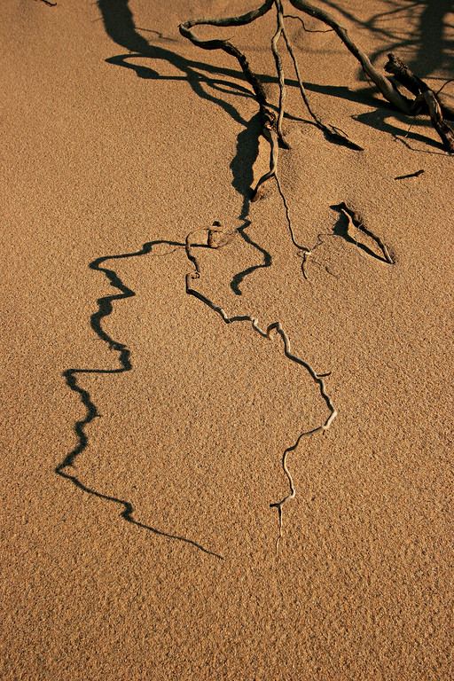 Dune shadow, Cape Cod