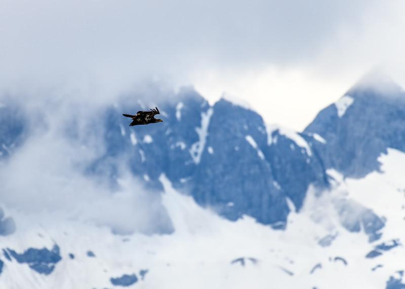 leaving icy strait-309.jpg