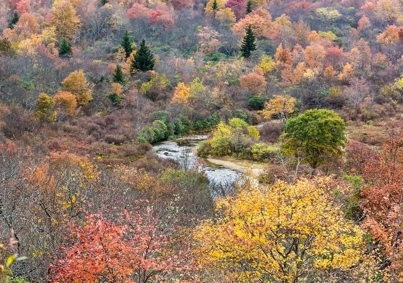 pisgah fall 2015-68.jpg
