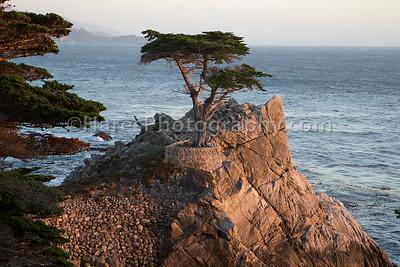 Monterey - Carmel CA-8834