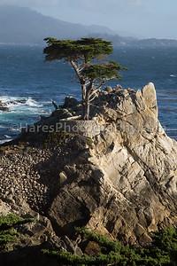 Monterey - Carmel CA-8827