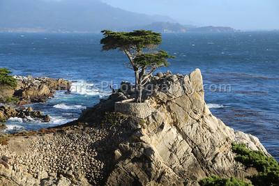 Monterey - Carmel CA-8822