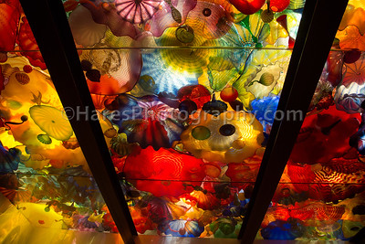 Chihuly - Seattle-1554