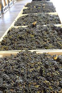 California Coast-Wineries-9879