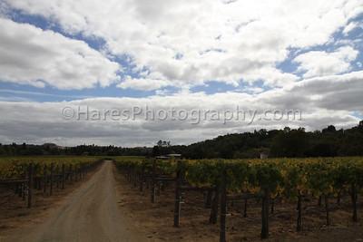 California Coast-Wineries-9898