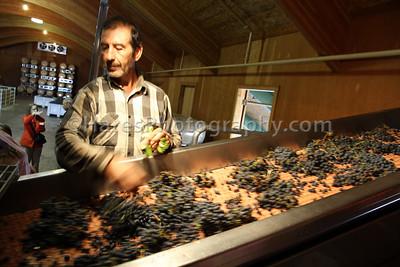 California Coast-Wineries-9885