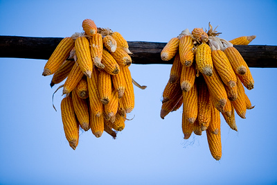 Out country side (Suhe) its all corn, corn and corn. It hangs everywere on the buildings or on the ground for drying