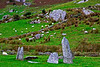 Stone Circle and Sheep, Beara Peninsula