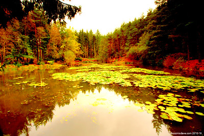 Great Berry Pond 007