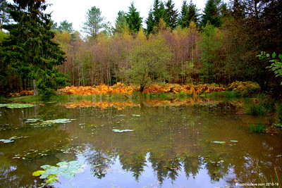 Great Berry Pond 018