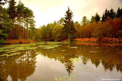 Great Berry Pond 021