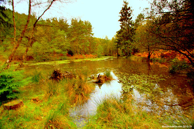 Great Berry Pond 009