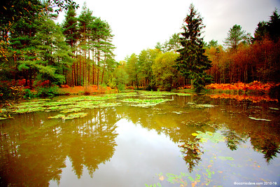 Great Berry Pond 019