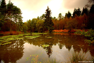 Great Berry Pond 013
