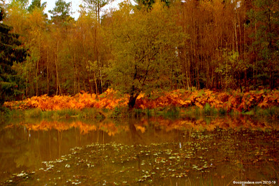 Great Berry Pond 011