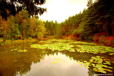 Great Berry Pond 008