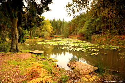 Great Berry Pond 006