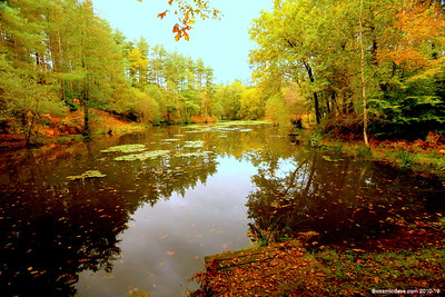 Great Berry Pond 025