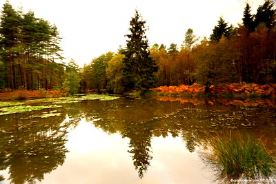 Great Berry Pond 012