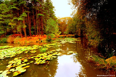 Great Berry Pond 003 (October 2014)