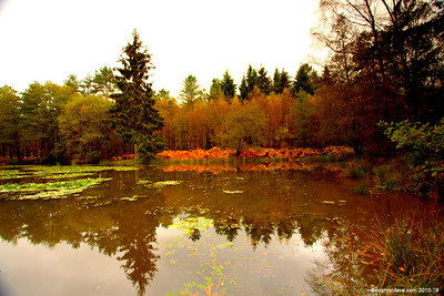 Great Berry Pond 017