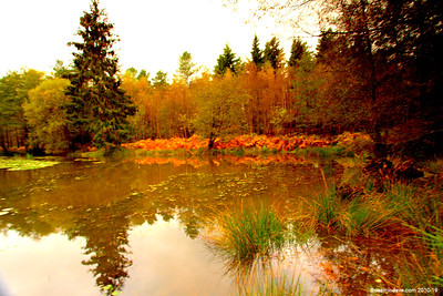 Great Berry Pond 010