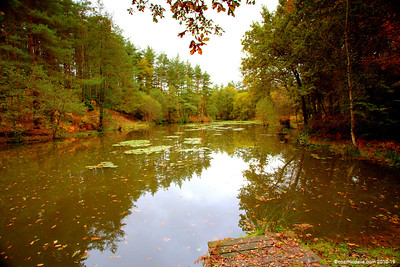 Great Berry Pond 022