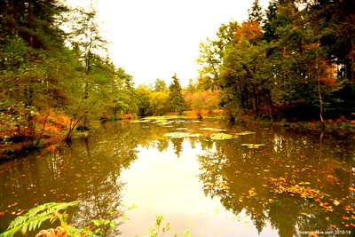 Great Berry Pond 026